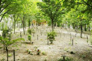 樹木葬 常陸国出雲大社