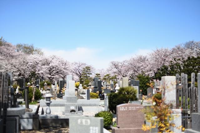 アイキャッチ画像 お墓と桜